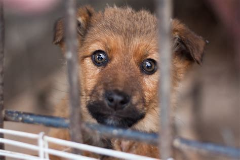 animal shelter puppies tips on adopting a shelter