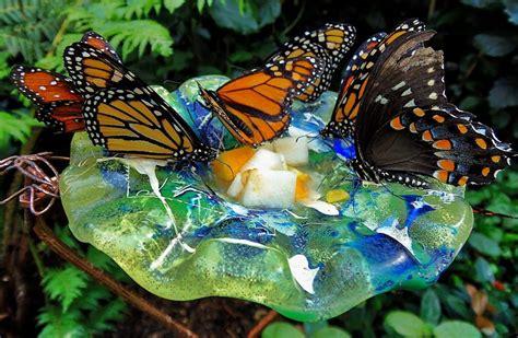 Quiet corner butterfly feeder in garden quiet corner