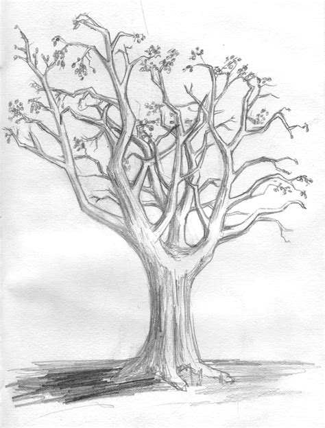 simple drawing tree tree drawings cliparts co