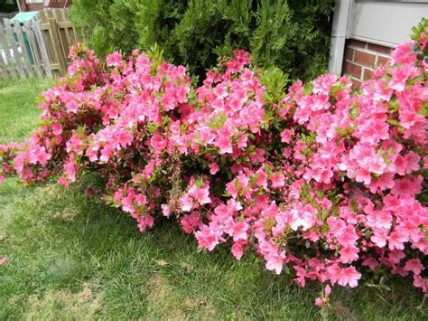 gardening landscaping shrubs for sun decoration