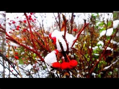 ci vuole un fiore lyrics sergio endrigo di neve 1962 doovi