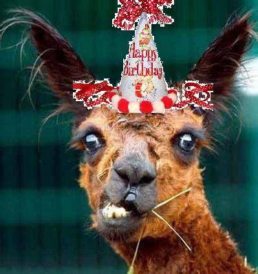 birthday llama drama llamas unite