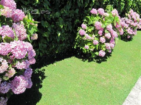 imagenes de jardines con hortensias foto jard 237 n con macizos de hortensias
