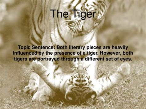 themes in hamlet and life of pi compare and contrast essay life of pi quotations
