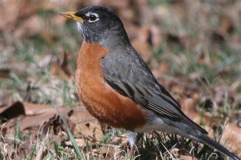 robin bird quotes quotesgram