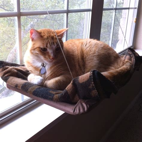 window seat for cat 75 best images about cat window seat on