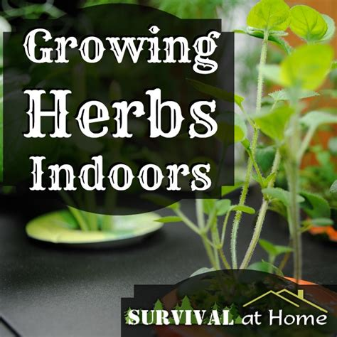 Growing Herbs Inside Growing Herbs Indoors A Year Harvest