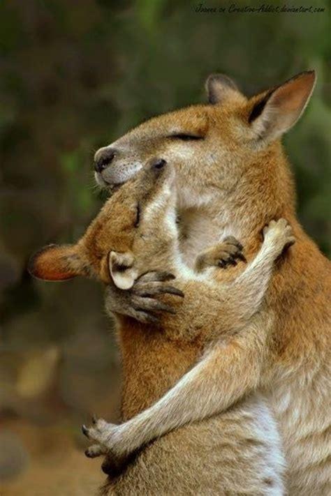 21 animal hugging pictures 21 pics amazing creatures