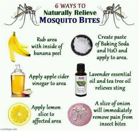 mosquito bites remedies pictures photos and images for