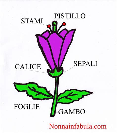 i fiore progetto i fiori per bambini di 5 6 anni nonna in fabula