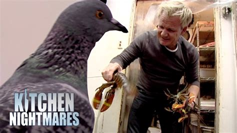 gordon ramsay kitchen nightmares dead lobster archives ramsay finds a pigeon and more dead lobster in the kitchen