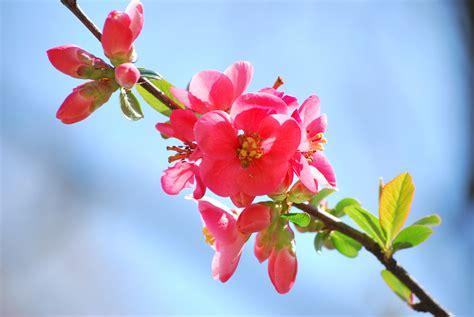 immagini fiori di primavera colori di primavera foto immagini macro e up