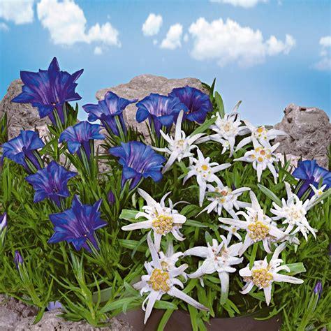 Blumen Für Den Garten Bestellen 1 by Set Preis 3 X Gebirgs Enzian Und 3 X Edelwei 223