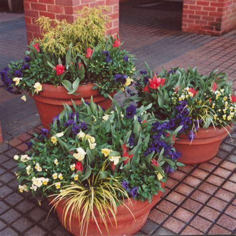 design flower containers container garden ideas hgtv