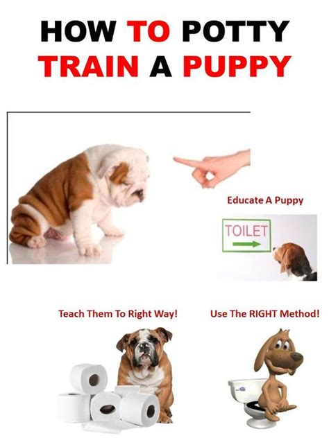 how to potty a shih tzu puppy how to potty a puppy puppy shih tzu maltease and more