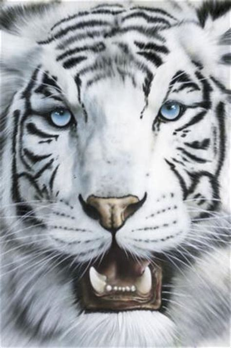 imagenes tigre blanco bengala im 225 genes del mundo animal tigre de bengala blanco