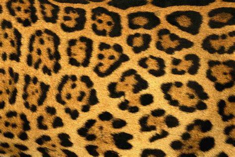 imagenes de uñas animal print 2015 fondos para whatsapp patada de caballo animal print