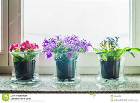 fiori da davanzale decorazione domestica adorabile con i vasi di fiori di