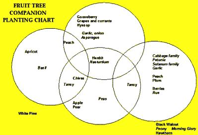 companion planting chart living herbs new zealand companion planting chart for fruit trees 722 best garden