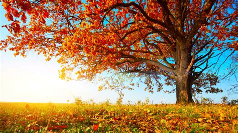 top leaves falling from tree drawing wallpapers