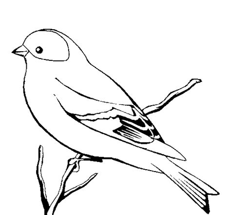 coloring pages canary bird canary coloring pages