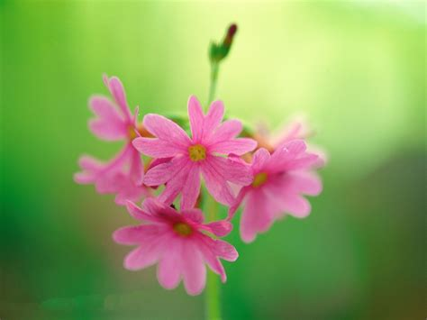 green wallpaper with pink flowers image of flowers pink flowers on green background