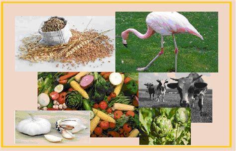 proveedor de alimentos cuida tu mundo medio ambiente como proveedor de alimentos