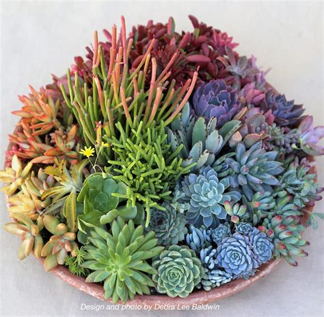 Whats New At The Succulent by Debra Baldwin S Succulent