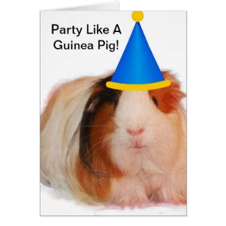 Happy Birthday Guinea Pig Card Pig Cards Invitations Zazzle Co Uk