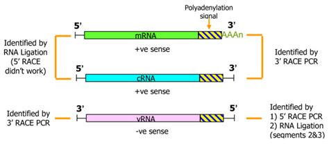 experimental design diagram maker diagram of rna types choice image how to guide and refrence