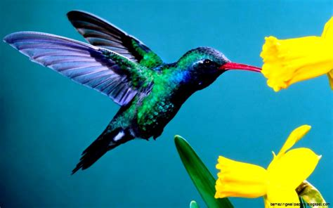 colorful hummingbirds colorful hummingbirds amazing wallpapers
