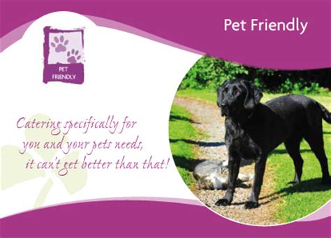 pet friendly bed and breakfast how to find a pet friendly bed and breakfast in ireland