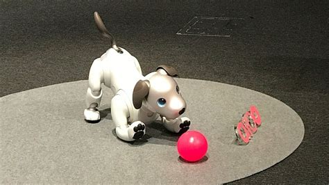 sony robots for sale sony s new aibo pet robot goes on sale tonight in japan