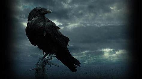 imagenes goticas el cuervo cr 237 ticas a 171 juego de tronos 187 191 c 243 mo de r 225 pido puede volar