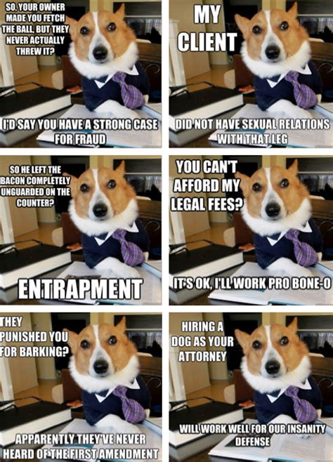 Corgi Lawyer Meme - a corgi lawyer i couldn t help it pinterest