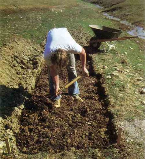 beginning gardening organic gardening earth news
