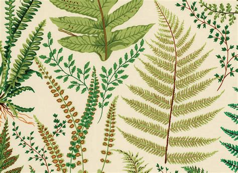 best printable fabric 7 best images of free printable botanical prints cotton