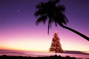 hawaiian lights hawaiian and new year s words and phrases