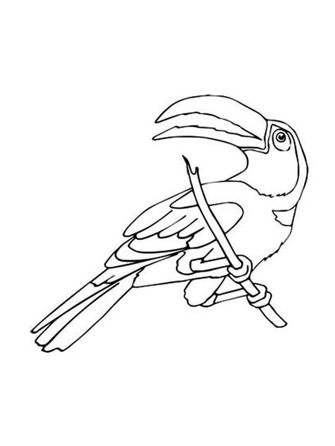 coloring pages of toucan birds toucan coloring pages download and print toucan coloring