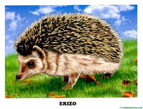 imagenes animales pequeños dibujos de animales salvajes para imprimir web del maestro