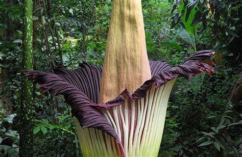 corpse flower botanical garden what to see at america s best botanical gardens