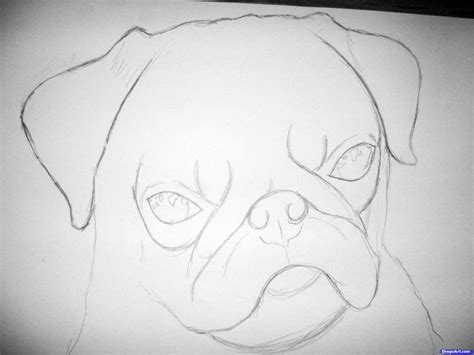 pug addiction how to draw a realistic pug step 2 1 000000083507 5 jpg 3264 215 2448 pugs