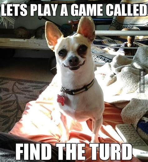 Funny Chihuahua Memes - let s play a game slight meme obsession and other