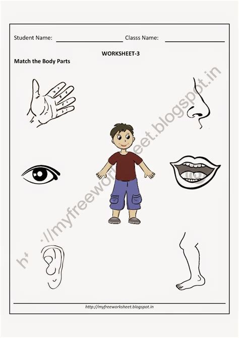 free printable evs worksheets for class 1 worksheet for class 1 evs body parts worksheets for class