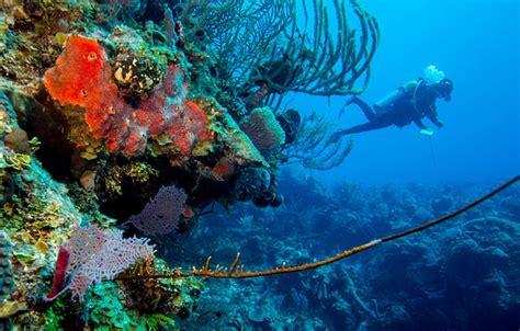 belize dive scuba dive belize with blackbird caye resort