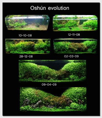small tank aquascaping aquascape of the month july 2009 quot oshun quot aquascaping