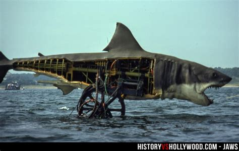 jaws story on boat is jaws a true story learn the real inspiration for jaws