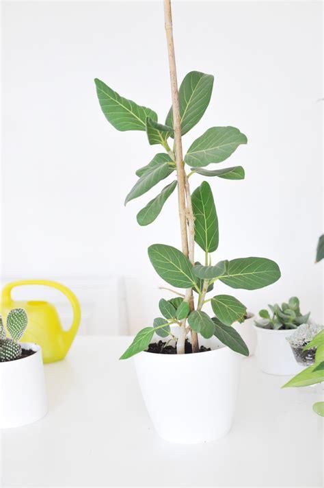 Zimmerpflanzen Die Direkte Sonne Vertragen zimmerpflanzen direkte sonne vertragen die besten