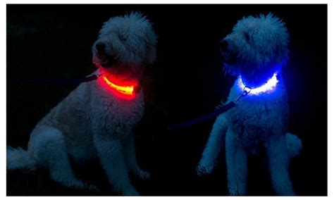 light up collar evelots 3 mode led light up collar assorted sizes colors groupon