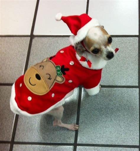 dias festivos chihuahua 36 best ropa para perros para dias festivos images on